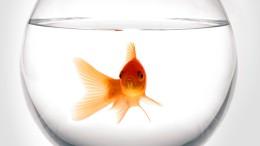 Dann vielleicht besser einen Goldfisch