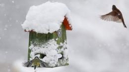 Gibt es dieses Jahr Weiße Weihnachten?