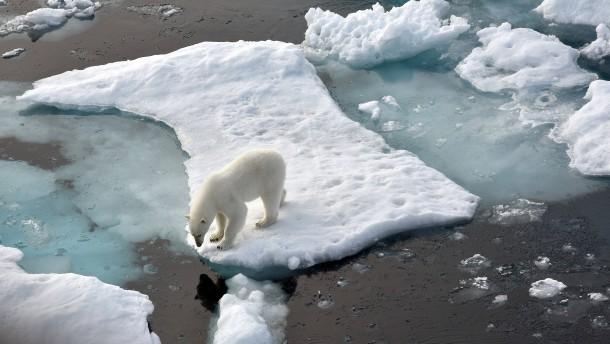 WWF veröffentlicht Liste zum Artensterben
