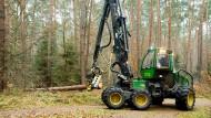 In einer Minute ist ein Baum zerlegt