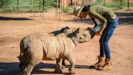 Kann der Handel mit Nashorn Tiere schützen?