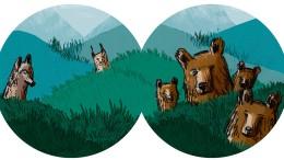 Immer Ärger mit den Bären