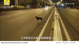 Treuer Hund in China trauert seit Monaten um Besitzerin