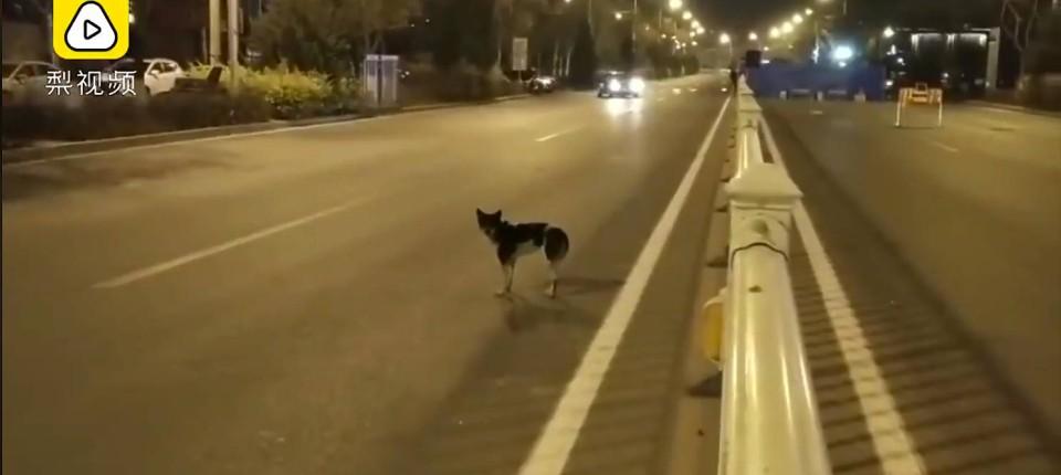 Treuer Hund In China Ein Echter Hachi
