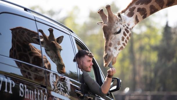 Zurück auf Safari in Stukenbrock