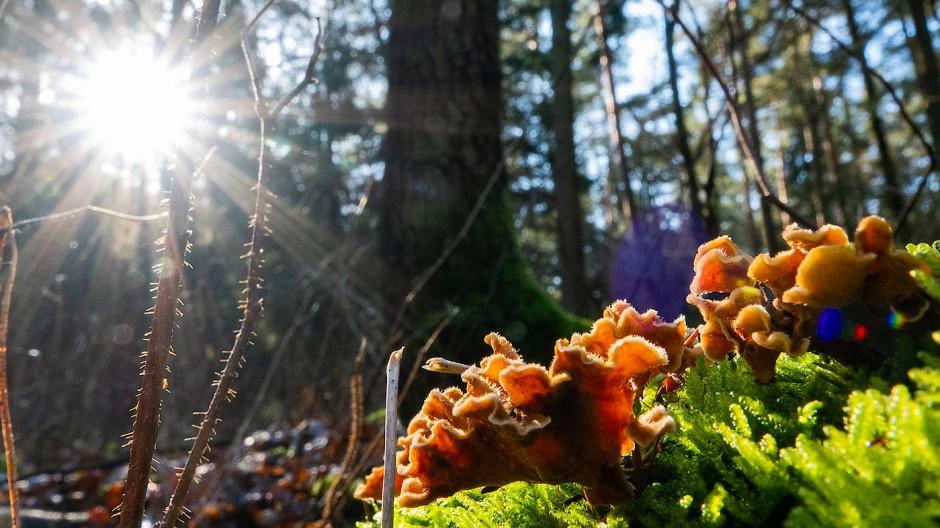 """Der 21. März ist der """"Internationale Tag des Waldes"""""""