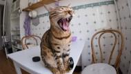 Für die Katz': Den Käufern stinkt's.