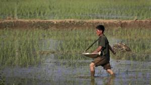 In Nordkorea wird die Nahrung knapp