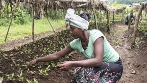 20 Milliarden gepflanzte Bäume bis 2022