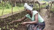 Äthiopien will 20 Milliarden Bäume bis 2022 pflanzen