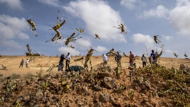 Heuschreckenplage in Ostafrika