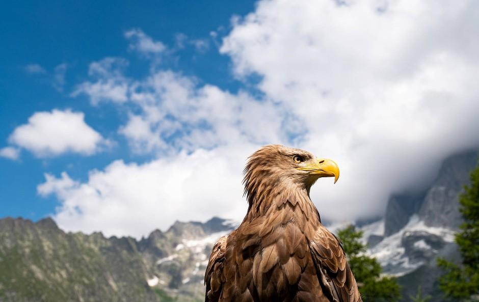 """Adlerauge: Auch ein Seeadler ist Teil des Projekts """"EagleWings - Protecting the Alps"""", mit dem sich Nomi Baumgartl dem Schutz der Alpen verschrieben hat."""
