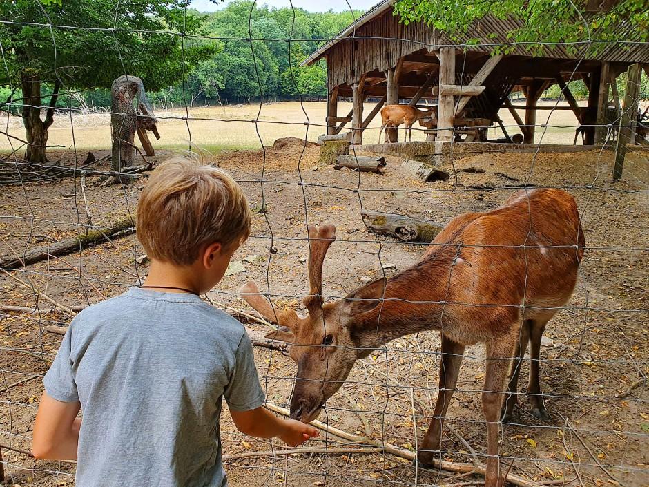 In Wiesbaden ist das Füttern der Tiere auch in Corona-Zeiten erlaubt.