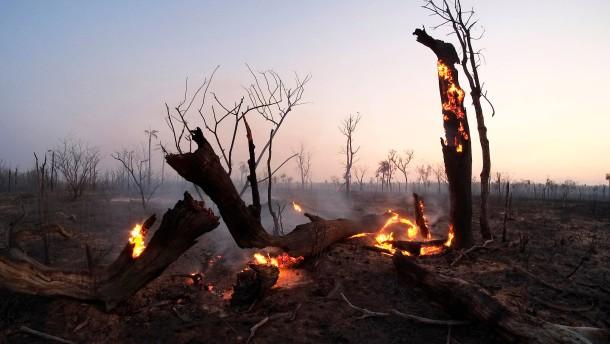 Im Schatten der Amazonas-Brände