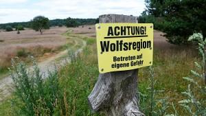 Kein Nachweis für Wolfsangriff in Niedersachsen