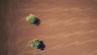 Was leer erscheint, bietet Raum für Sinn und unbekannte Kafka-Manuskripte: Bäume in der Negev-Wüste.