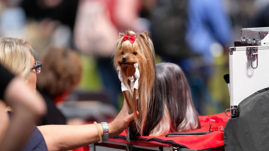 Alles für den Hund: Hundemesse in Hannover