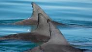 Illegale Fischerei kostet zahllosen Delfinen das Leben