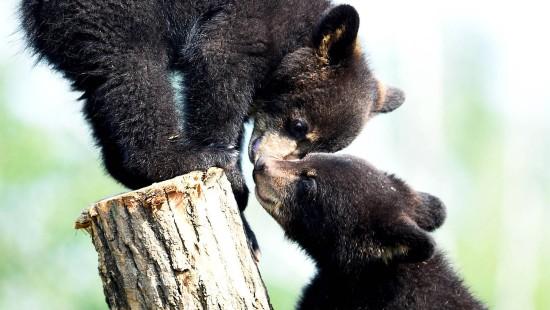 Jungtiere im Bärenglück