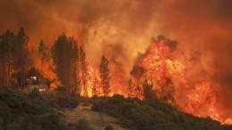 Waldbrände außer Kontrolle