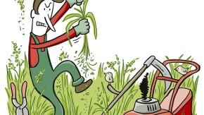 Alles im grünen Bereich: Der verdammte Glatthafer
