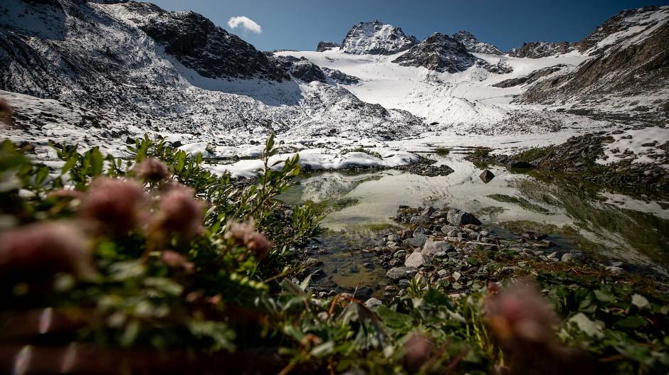 Pflanzen in der Nähe eines Sees vor dem Jamtalferner Gletscher.