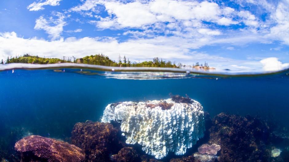 Das Archivbild von 2020 zeigt die Folgen der von der Erderwärmung ausgelösten Korallenbleiche am australischen Great Barrier Reef.