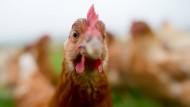 Wie stark schadet dieses Huhn dem Klima?