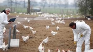 Wohl doch noch belastete Eier im Handel