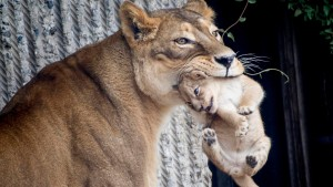 Man muss überzählige Tiere töten