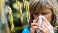 Gefahr in Verzug: Wenn Haselsträucher blühen, verbreiten sich Pollen, unter denen viele Allergiker leiden.