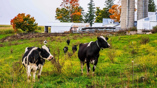 Wisconsin: Milchbauern als Präsidentenmacher