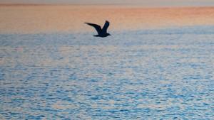 Herr Pfarrer und das Meer