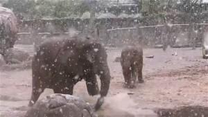 Elefanten freuen sich über Schnee in Las Vegas