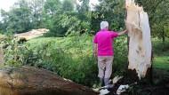 Umgeknickter Baum in Dramfeld (Niedersachsen): Mindestens 25 Bäume sind entwurzelt worden.