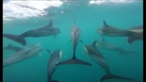 Delfine im Ärmelkanal gesichtet