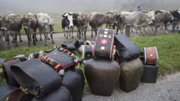 Münchner Gericht weist Klage gegen Kuhglocken-Lärm ab
