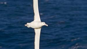 Vögel halten ihre Fristen immer ein