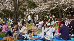 Wieso Japan die Blütenlaune vergeht