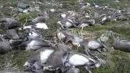 Mehr als 300 Rentiere durch Blitzschlag gestorben