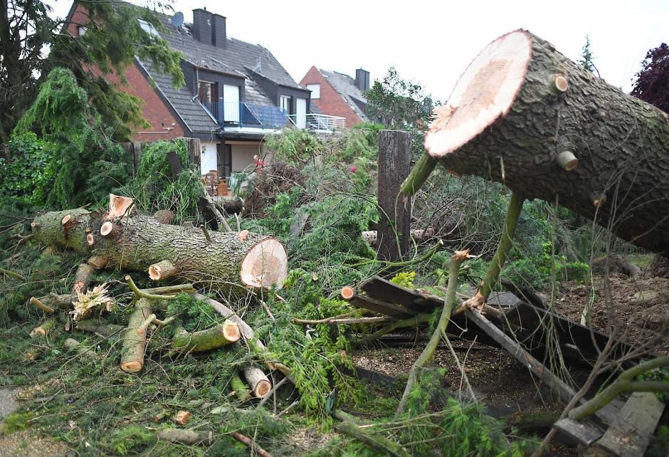 Von dem Wirbelsturm umgerissene Bäume liegen auf einem Grundstück.