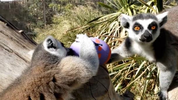 Tierische Ostern im Zoo
