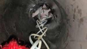 Feuerwehr rettet Katzenbabys aus Heizungsrohr