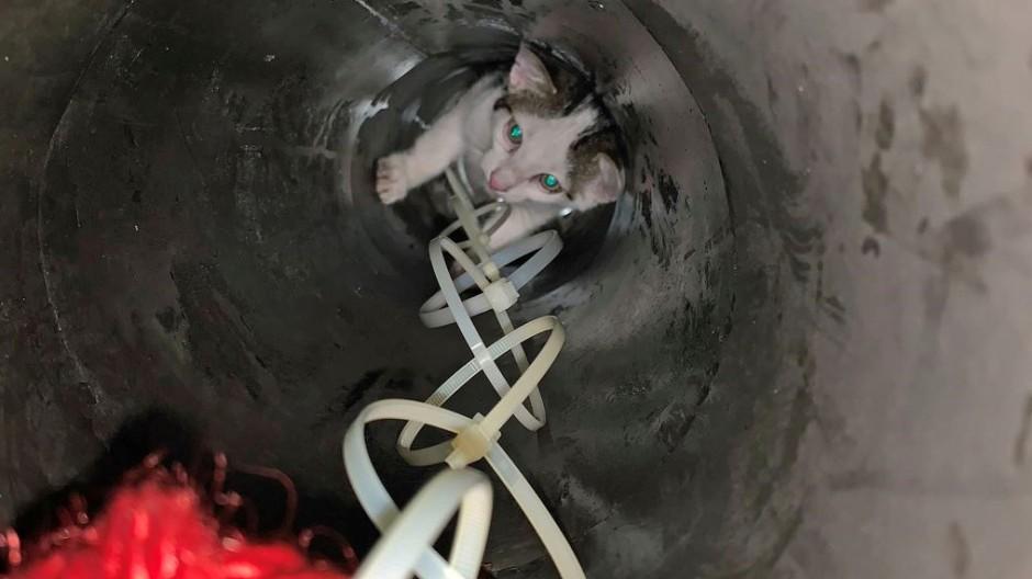 Fingerspitzengefühl: Zwei Katzenbabys steckten im Heizungsrohr eines Wohnhauses in Nauheim fest.