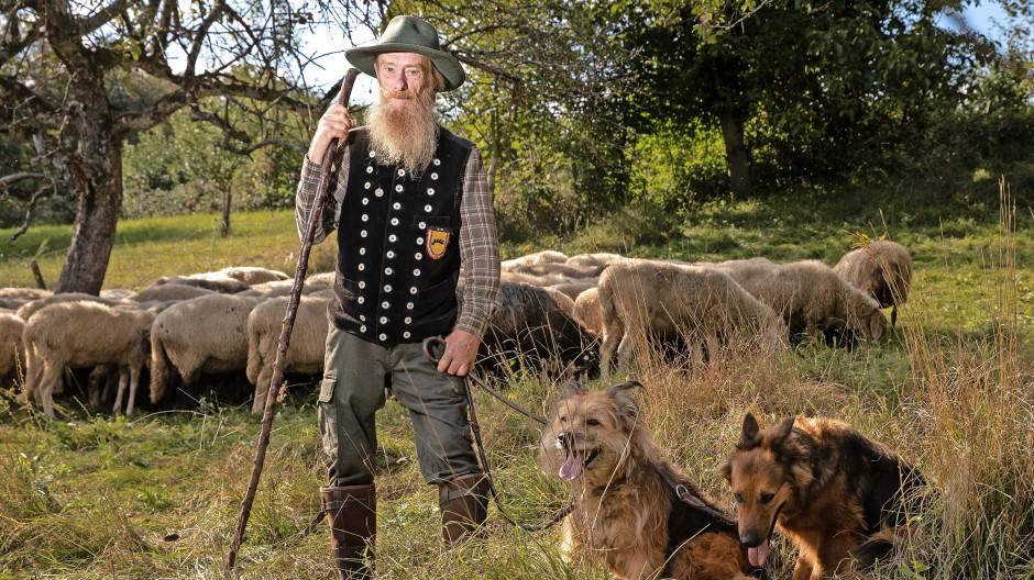 Edgar Engist mit seinen Hunden und Schafen auf seiner Wiese in Bollschweil. Der Schäfer fragt sich, warum Wölfe so viel mehr wert sein sollen als seine Arbeit.