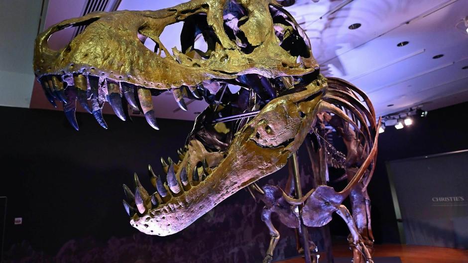 T-Rex-Skelett für Rekordpreis versteigert