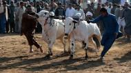 Stierrennen gegen die Angst vor Terror