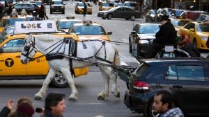 Das Pferde-Politikum von New York