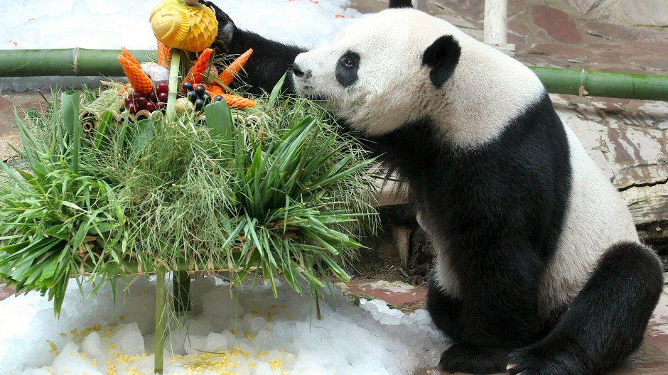 Panda Chuang Chuang bei seinem Geburtstag 2007