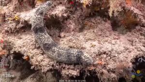Forscher entdecken Riesenriff vor Küste Australiens